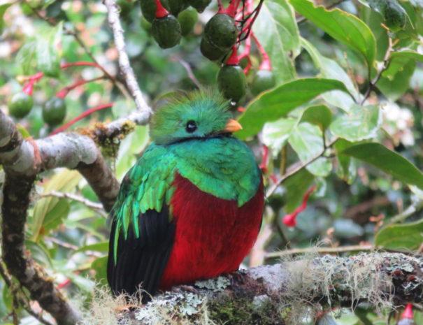 Vallee de Dota Quetzal